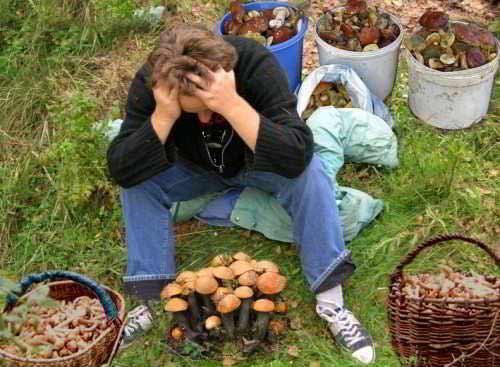 какие грибы растут на урале фото