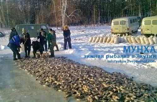 МУНХА. Зимняя рыбалка в Якутии!!! (Ловля карася зимой.) - рыба и ...