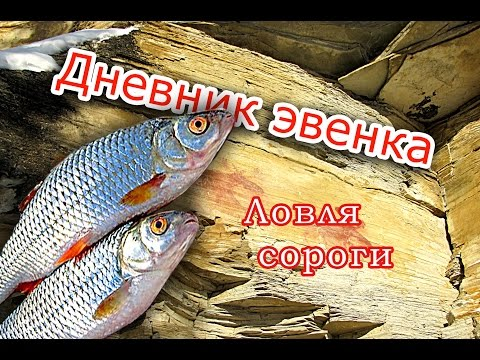 рыба тугунок на что ловить