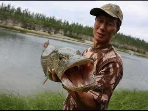 рыбалка в якутии-видео